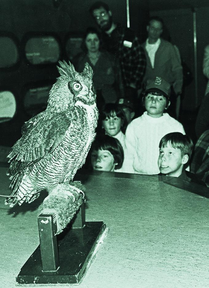 Spooky, The Owl
