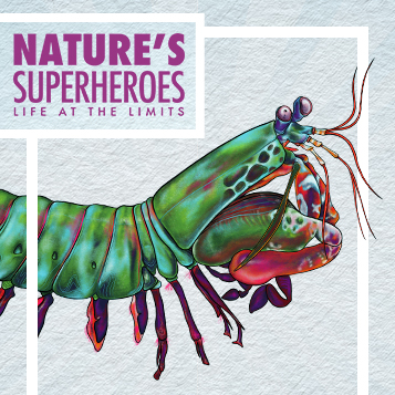 Nature's Superheroes: Life at the Limits