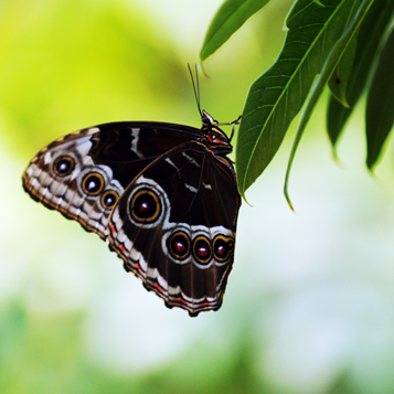 Butterfly Garden picture