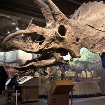 Colossal Fossil: Triceratops Cliff picture